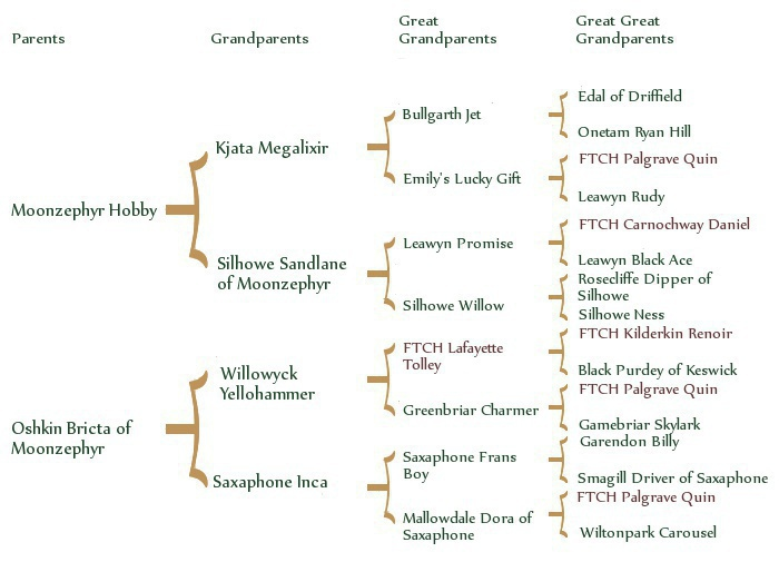 willowpedigree